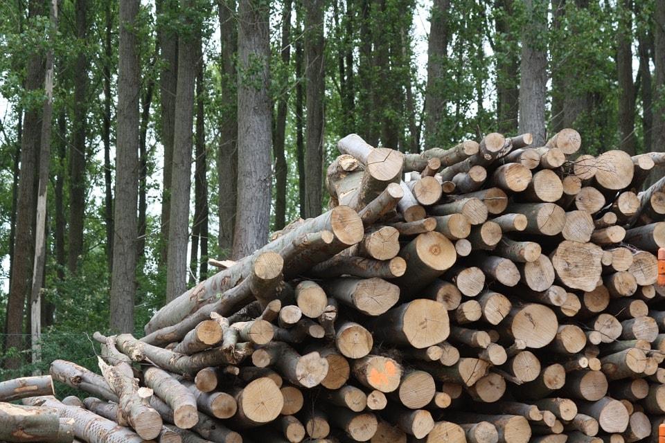 carmaq biomasa