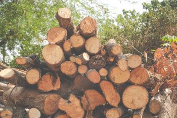 reciclar madera